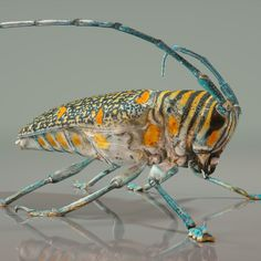 Photorealistic 3D Scanned insect