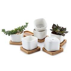 T4U 2 Inch Ceramic White Mini Square succulent Plant Pot/... https://www.amazon.com/dp/B01ETE2KXW/ref=cm_sw_r_pi_dp_x_7knQyb2PM8Y2Z
