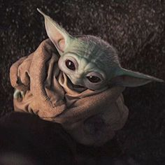 Adorable little womp rat. Yoda Gif, Yoda Meme, Yoda Funny, Yoda Images, Cuadros Star Wars, Star Wars Pictures, Star Wars Baby, Star War 3, Cultura Pop