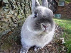 bunny with attitude