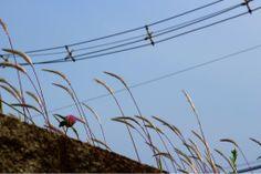 なんか秋っぽい  #art #artwork #写真 #photography #アート#myphotos  #photo #花 #植物 #flowers #風景 #landscape