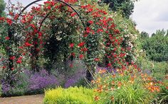 Royal National Rose Society Gardens - RNRS - The Gardens of the Rose, Hertfordshire, England | Red rose covered pergolas (12 of 12)