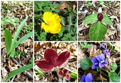 Cbus52: Columbus in a Year: Spring at Battelle Darby Creek