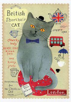 British Shorthair cat | par ichabodhides