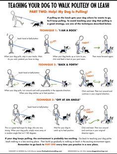 Walk your dog correctly on a leash