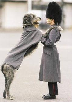 PORTRAIT, UK. An Irish guard in uniform with mascot Irish Wolfhound, also in uniform