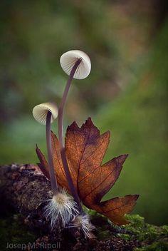 mushroom still life  :)