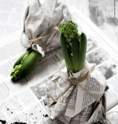 DIY: Hyacinth in the black and white jacket- DIY: Hyazinthe in der schwarz-weißen Jacke Photo by Johanna Eklöf / Formelle Design Spring, Flowers, Bulbs - White Christmas, Christmas Time, Xmas, Fleurs Diy, Black And White Jacket, Black White, Spring Photos, Deco Floral, Bulb Flowers