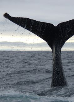 Whale Watching in Maine at Odyssey Whale Watch in Portland! - definitely on my bucket list