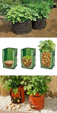 Выращивание картофеля в мешках.