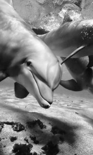 Dolphins. S)