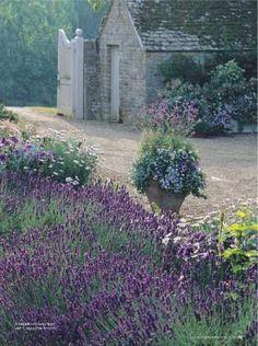 Vertical Gardening with old gate doors gazebo lavender garden :: stone cottage don't mind if i do Lavender Cottage, Lavender Fields, Lavender Flowers, Lavander, Lavender Blue, Purple Flowers, Spanish Lavender, French Lavender, Colorful Roses