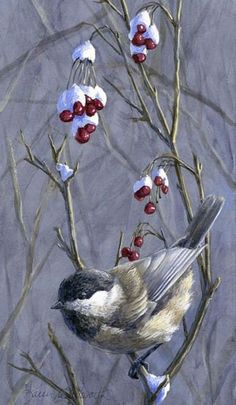 ARTFINDER: Winter Harvest 2 - Berries, Snow, and. by Karen Whitworth - Black Capped Chickadees can be found throughout the state of Alaska, and the world. Their seemingly cheerful antics bring warmth to even the coldest of winte. Winter Painting, Winter Art, Painting Art, Bird Paintings On Canvas, Christmas Bird, Bird Pictures, Winter Pictures, Bird Drawings, Cute Birds
