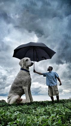 Photographer, Christopher Cline uses photoshop to create wildly hilarious pictures of him and his dog Juji. Giant Dogs, Big Dogs, Small Dogs, Dogs And Puppies, Minnesota, Very Big Dog, Dog Rooms, Entertainment, Photo Series