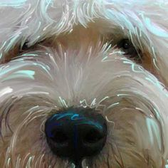 Soft Coated Wheaten Terrier Art