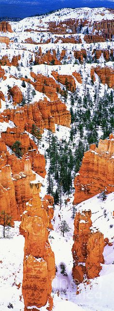 Winter storm blankets Thor's Hammer in Bryce Canyon National Park, Utah by Dave Welling