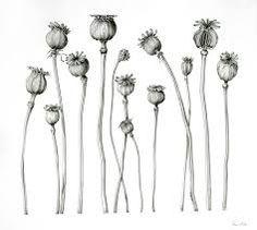 Resultado de imagen para botanical vintage illustrations