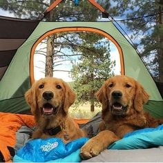 The feeling you get when you are reunited with your best friend. #camp #campvibes #camping with @thegoldenaspen Want to get featured? FOLLOW US ON IG @hikingwithdogs_ TAG US IN YOUR VIDEOS/PHOTOS YOU'D LIKE US TO FEATURE #hikingwithdogs