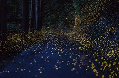 These photos of fireflies illuminating a dark forest are truly breathtaking. Remembering the magic of our planet and our children.