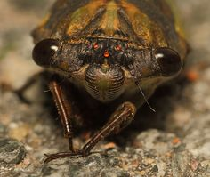 In case you haven't heard, we're going to be invaded by cicadas. <b>But it's not all bad, some of them are kinda cute.</b>