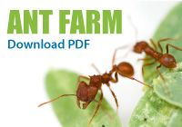 Ask A Biologist ASU - Ant Farm Activity, Download PDF