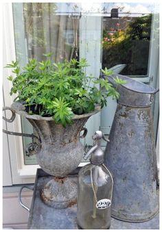 Zinc container garden
