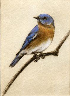 http://www.melaniefain.com/Melanie_Fain_Etchings_and_Watercolors/Bluebird.html