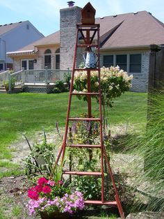 Orchard ladder in my back yard.