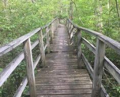 7 Footbridge Hikes In Rhode Island That Are Simply Enchanting Maple Valley, Lets Run Away, Forest Path, United States Travel, Top Of The World, Rhode Island, Hiking Trails, Water Features, Cool Places To Visit