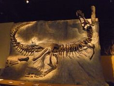 'Black Beauty' a Tyrannosaurus rex fossil. Minerals stained the bones black during fossilization. Royal Tyrrell Museum