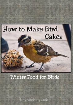 How to Make Bird Cakes Bird Cakes, Grow Your Own Food, Cute Animal Pictures, Winter Food, Animals And Pets, Birds, Homemade, Jade, How To Make