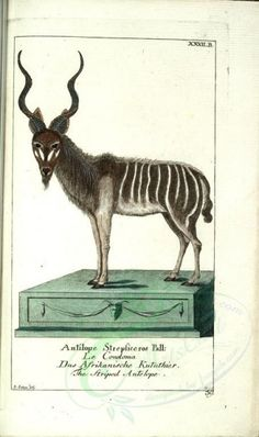 Striped Antelope - high resolution image from old book. Zoo 2, Botanical Drawings, Botanical Illustration, Victorian Books, Science Illustration, Art Clipart, Nature Prints, Zoology, Cool Fabric
