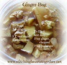 the care and feeding of a ginger bug