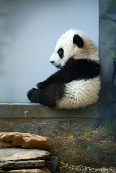 timeout for panda.