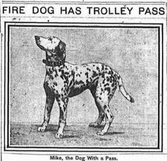 Mike was the fire dog of FDNY Engine Company 8 from 1908-1914. Twice he won first place at the Westminster Kennel Club Dog Show. He also had his own trolley pass.