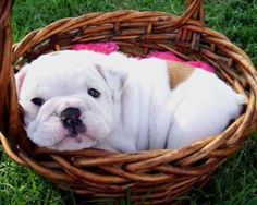 cuteness, ready for the picnic..