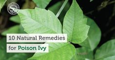 Having a poison ivy rash is never a pleasant experience. Here is a list of…