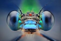 Het is altijd bizar om te zien hoe bepaalde onderwerpen er van heel dichtbij uitzien. Vooral wanneer het onderwerp insecten zijn. Fotograaf Dušan Beňo is erg actief binnen de macrofotografie en laat aan iedereen zien hoe awesome insecten van dichtbij zijn.