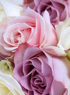 Obsession — chasingrainbowsforever: Colors ~ Pink and. Beautiful Rose Flowers, All Flowers, My Flower, Beautiful Flowers Wallpapers, Flower Power, Flower Phone Wallpaper, Color Rosa, Purple Roses, Belle Photo