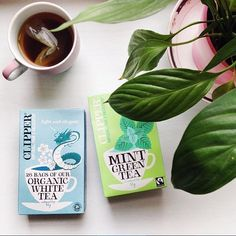 Today we start our morning just like Amanda from @herecomesthesunblog. With organic minty green tea from @clipperteas. Photo credits: @herecomesthesunblog