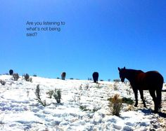 You are talking. But are you listening?  #VistaCaballo #qoute #Listening
