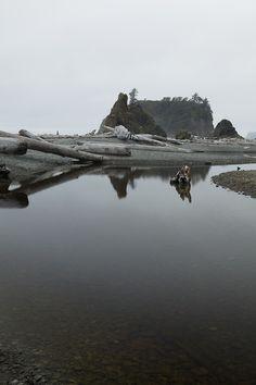 Ruby West Beach, Olympic National Park by Jeff Few
