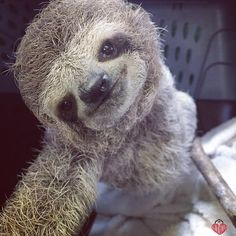 That Sloth Blog.