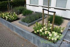 Sleek robust front garden: modern Garden by Visser Tuinen