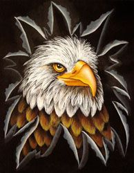 Eagle Eye Painted Canvas by Jillybean Fitzhenry