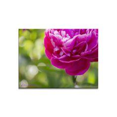 Blumenbild auf Leinwand, Fototapete oder Kunstdruck: Happy in Pink