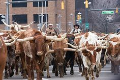Longhorns in Ft Worth! This is a must see! Everyday they herd them around the Historic Stockyards District! Longhorn Cattle, Cattle Drive, Texas Forever, Loving Texas, Texas Pride, Fort Worth Texas, Lone Star State, Texas History, Texas Homes