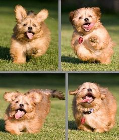 Having a bad day? One look at Happy Puppy and your day will be instantly better!