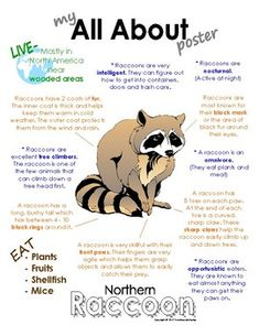 My All About Woodland (Forest) Animal Books / Workbooks - Bundle Pack II - İnteresting İnformation And Curiosities Jaguar Animal Facts, Forest Animals, Woodland Animals, Facts About Raccoons, North American Animals, Nocturnal Animals, Facts For Kids, All About Animals, Woodland Forest