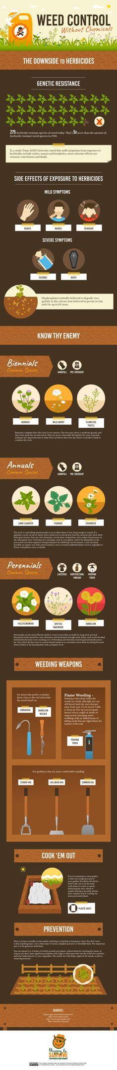 37 Best Weeds And How To Get Rid Of Them Organically Images On